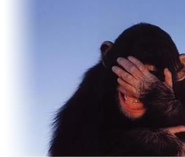 Monkey_facepalm